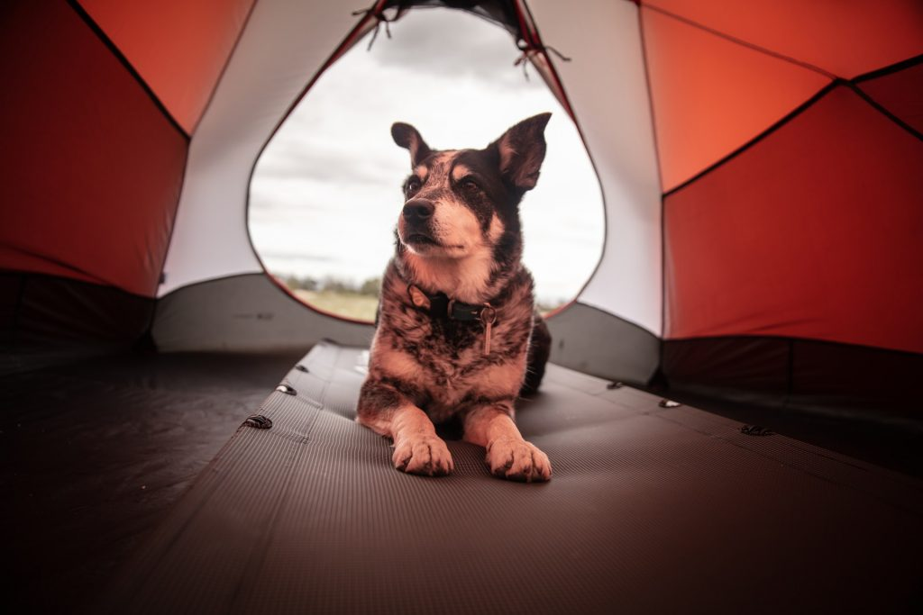 dog camping guide
